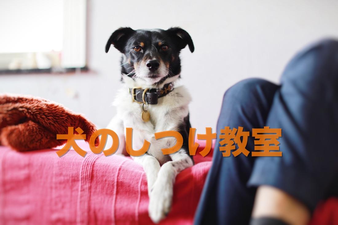 犬のしつけ教室 訓練