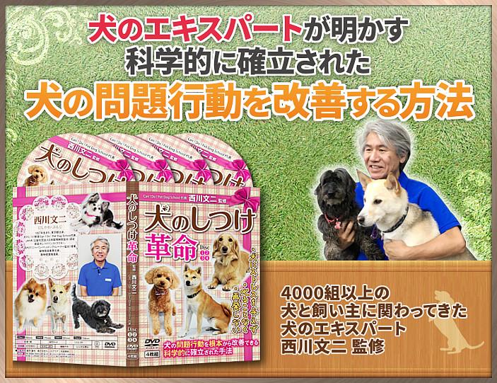犬のしつけ DVD