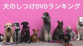 犬のしつけ動画/DVDランキングTOP5